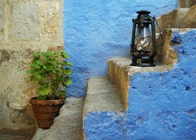 plant lamp-1