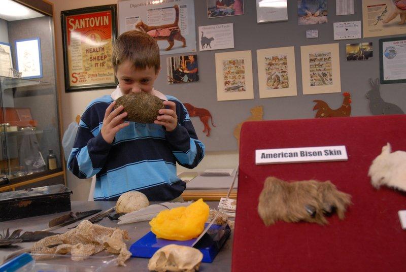 The Veterinary Medicine Museum