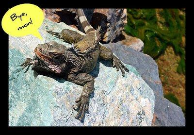 bye_lizard.jpg