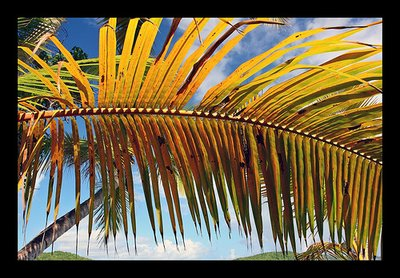 gibney_palm_leaf.jpg