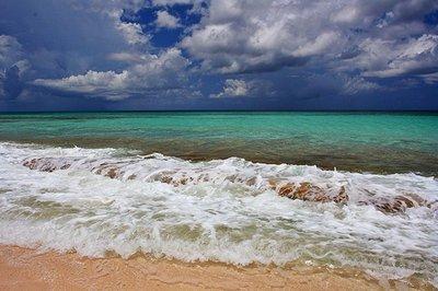 nippers_ocean.jpg