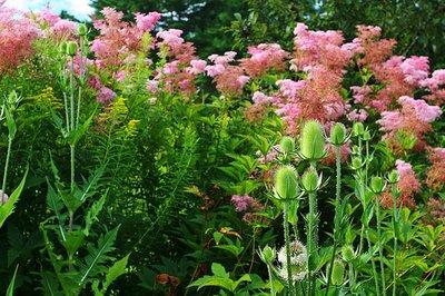 pink_flowers.jpg