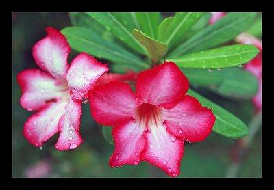 rainy_flower.jpg