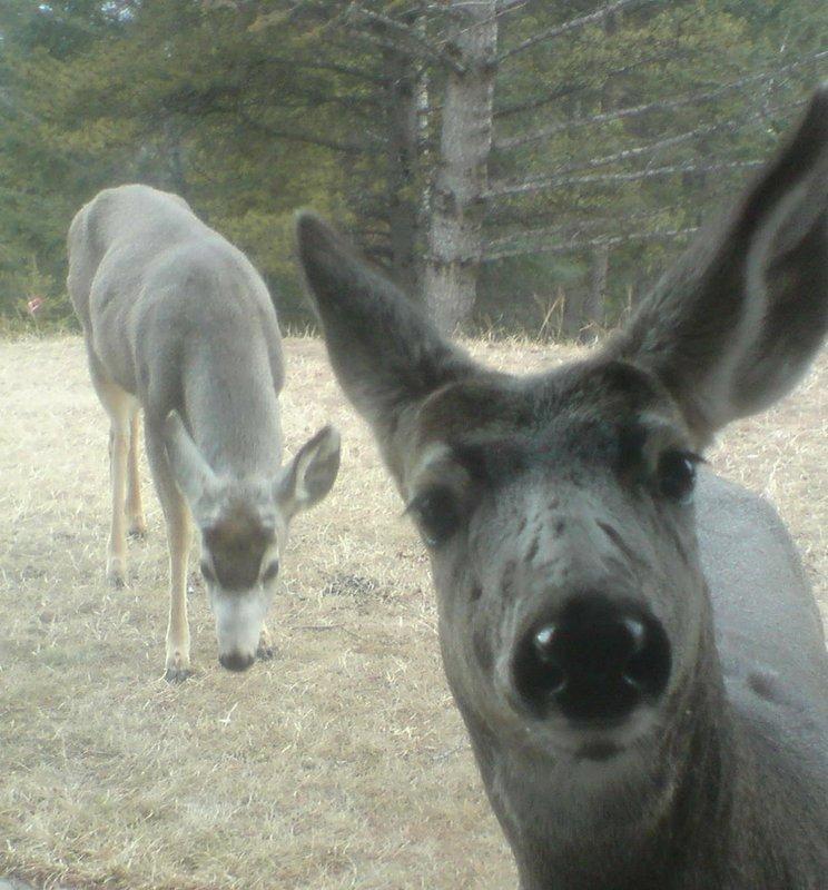 Deers visiting my lodge