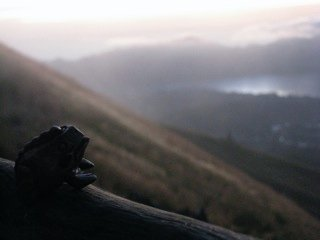 bali-_frog_n_summit.jpg