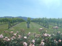 Sunny days on the wine tour