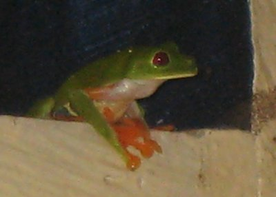 A local frog joined us in the bathroom one night.