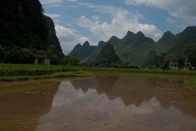The karsts reflecting in a rice paddy.