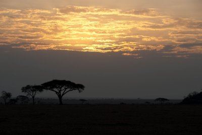 Sunrise in the Serengeti.