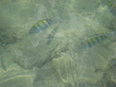 There are lots of colorful fish in La Piscina.