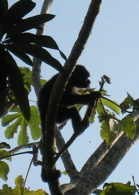 Monkeys hung out above our room at the Mini-hostel in Santa Teresa.