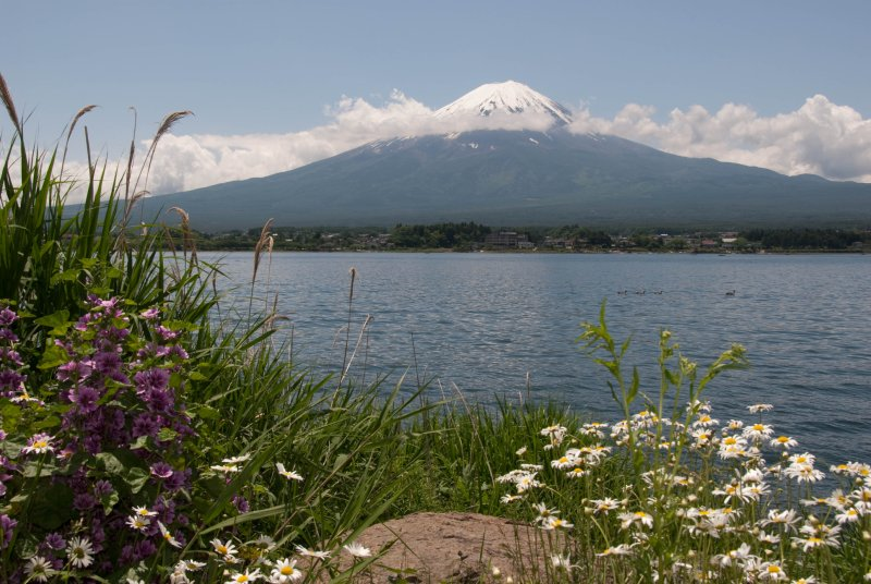 Mt. Fuji with flowers