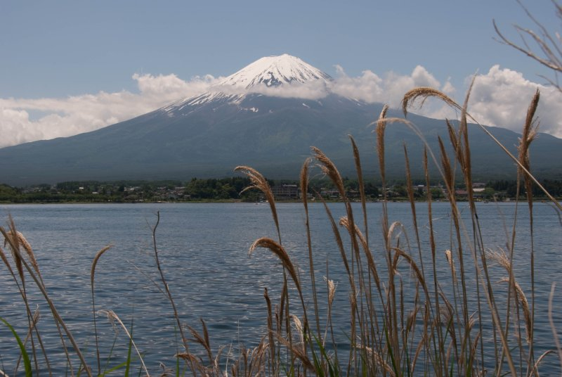 Mt. Fuji with tall grass