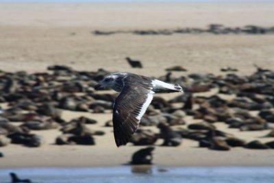 Sea_Bird_a..vis_Bay.jpg