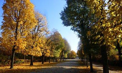 Autumn_trees.jpg