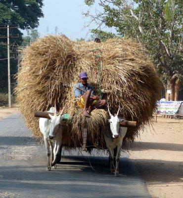 Bullock_cart.jpg