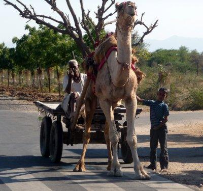 Camel_cart.jpg