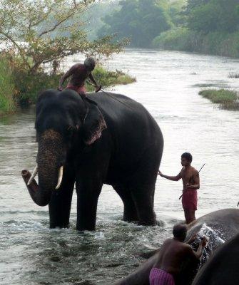Elephant_bath_time.jpg