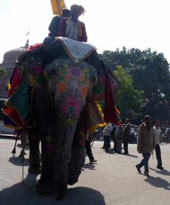 Elephant_in_Jaipur.jpg
