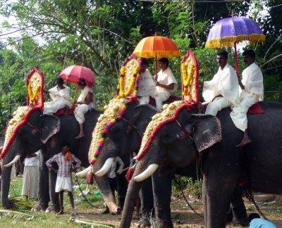 Elephant_parade.jpg