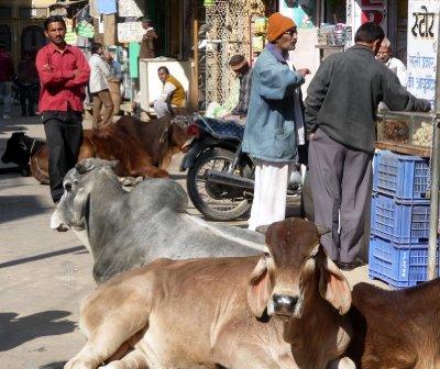 Jaisalmer_street.jpg