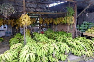 Plantain_and_bananas.jpg