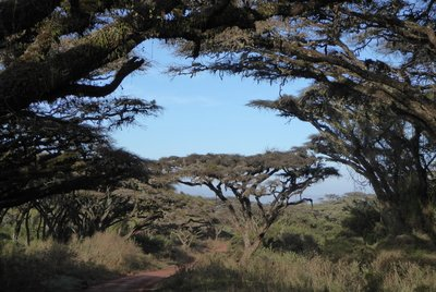 Road_to_Ngorongoro_crater.jpg