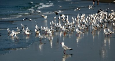 Sea_birds.jpg
