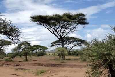 Tree_Landscape.jpg