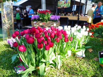 Tulip_stall.jpg