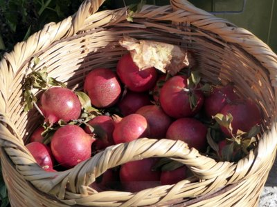 basket_of_pomegranites.jpg