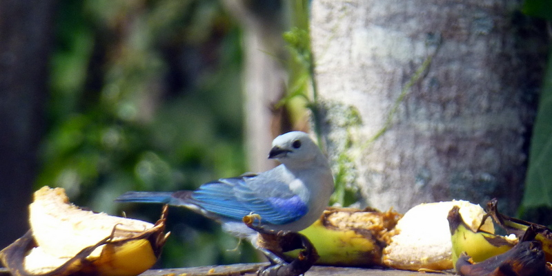 large_Blue_bird.jpg