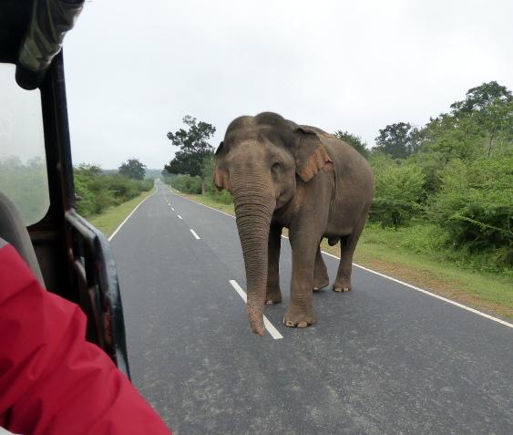 large_Elephant_chaser.jpg