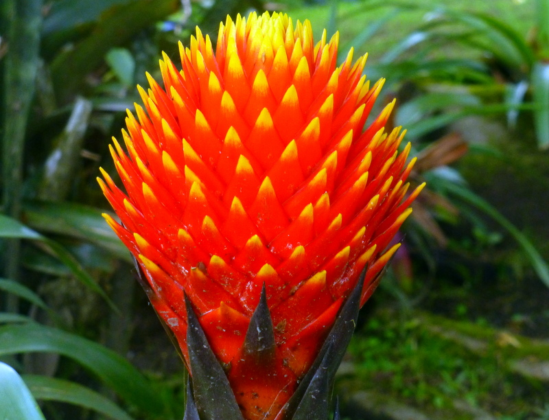 large_Exotic_flower6.jpg