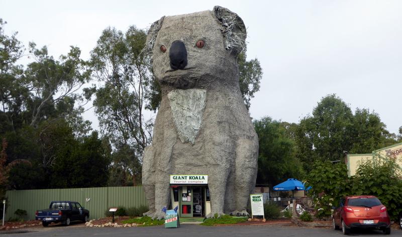 large_Giant_Koala.jpg