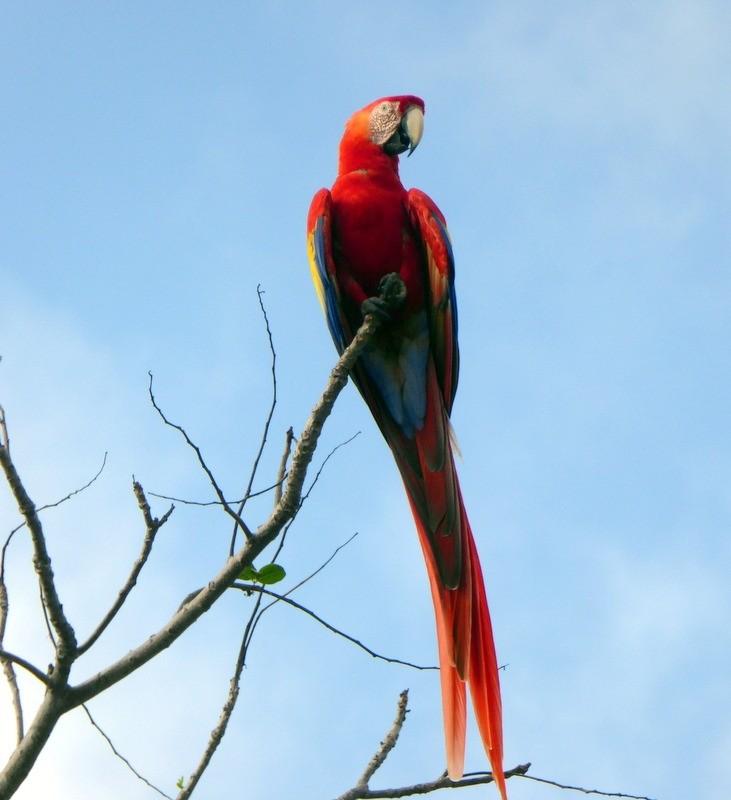 large_Macaw.JPG