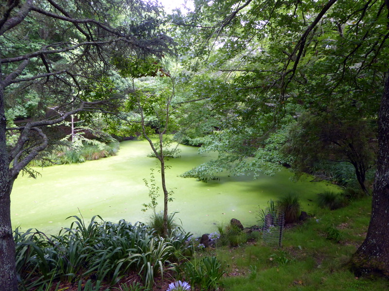 large_Pond_at_Arboretum.jpg