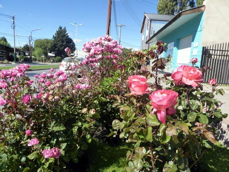 large_Roses.JPG