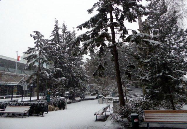 large_Snowy_Vancouver.jpg