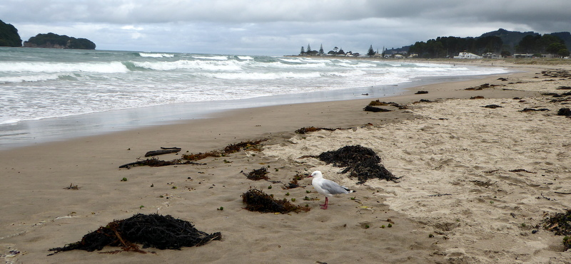 large_Whangamata_Beach.jpg