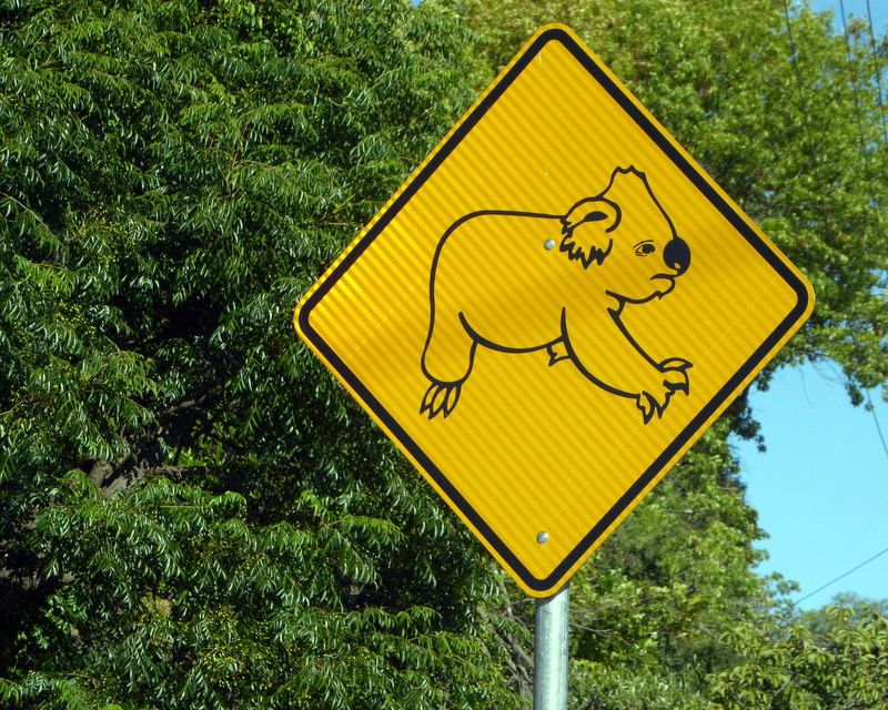 large_beware_koalas.jpg