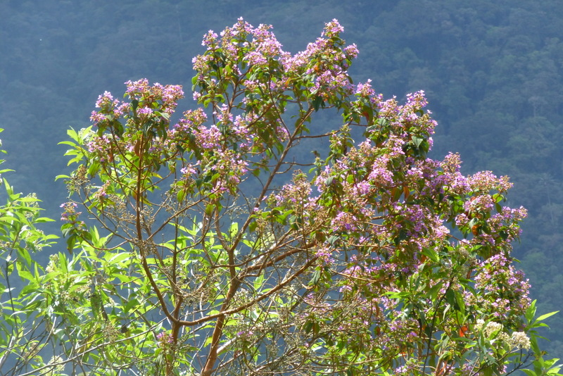 large_flowering_tree.jpg