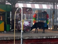 Cow_on_the_platform.jpg