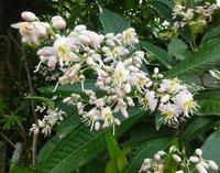 Exotic_flower3.jpg