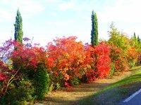 Luberon Colours 9