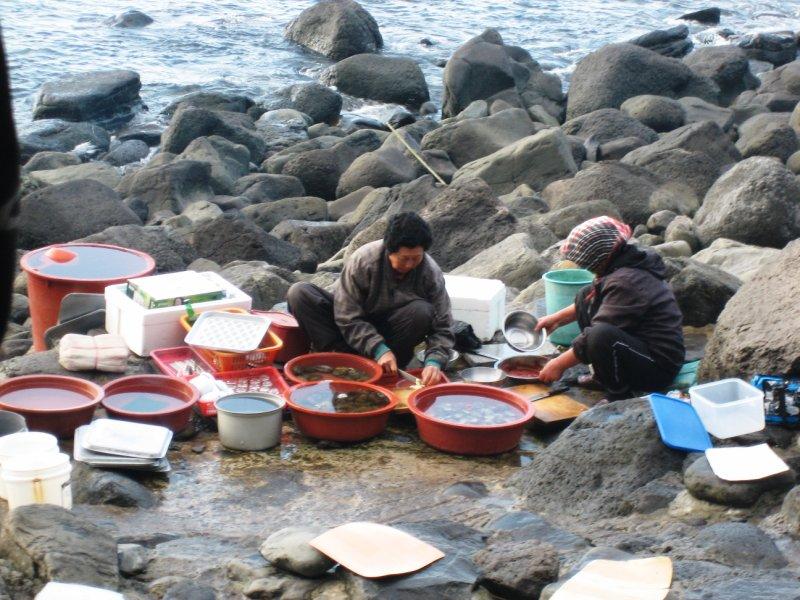 Shellfish gathering, Jeju