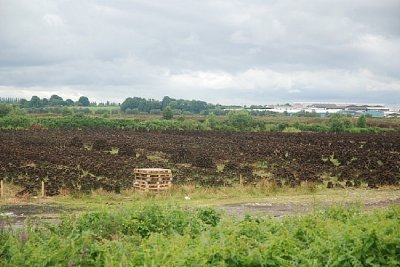 Typical peat bog