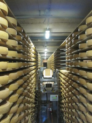 The automated cheese-turning machine turns and salts thousands of cheeses daily