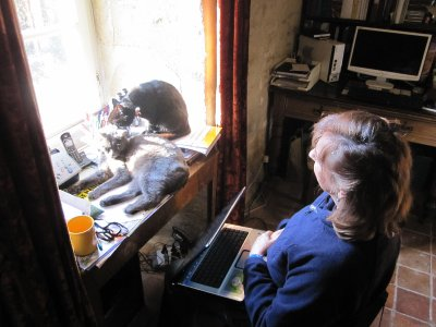 The cats tend to cramp one's computer space - but Sandi doesn't mind!