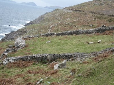 Ancient stone walls and grazing sheep atop the cliffs